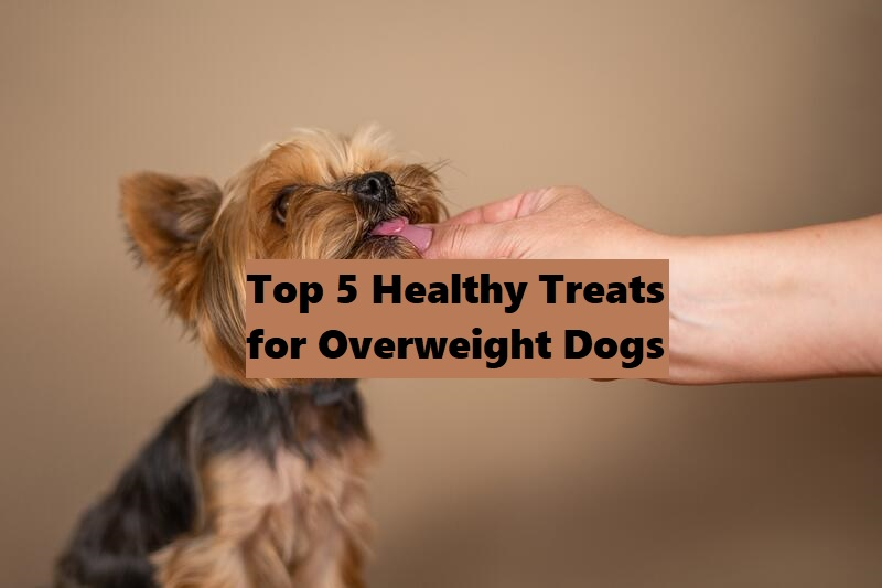 Top 5 Healthy Treats for Overweight Yorkie Dogs